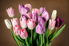Colorful tulips close-up Stock Images