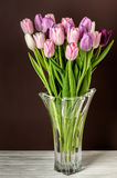 Colorful tulips close-up Royalty Free Stock Photos