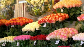 Colorful tulips displayed on the flower shop GH4 4K UHD stock video footage