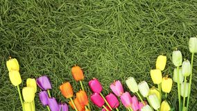 Colorful tulips in a field. Spring - poster with free text space, Flat lay, top view. Valentines background. Horizontal stock video