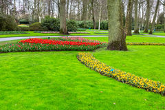 Colorful tulips flowerbed in spring garden, Holland Stock Image
