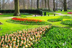 Colorful tulips flowerbed in spring garden Royalty Free Stock Photo