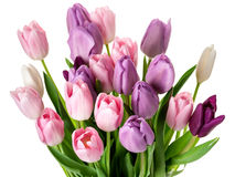 Colorful tulips flowers bouquet Royalty Free Stock Image