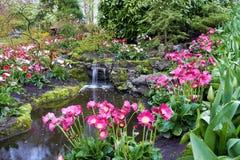 Colorful Tulips flowers in Keukenhof Holland Stock Photography