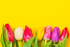 Colorful tulips flowers in a row on yellow background with free space. Mothersday or spring concept. Colorful tulips flowers in a row on yellow background with Royalty Free Stock Images