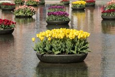Colorful tulips flowres in the pond in front of the Rijksmuseum in Amsterdam Royalty Free Stock Photography