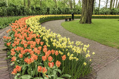 Colorful Tulips Garden. Spring Time Colorful Tulips Garden leading line, Netherlands Stock Photography