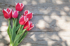 Colorful tulips on garden table Stock Images