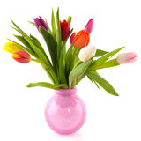 Colorful tulips in glass vase Stock Image