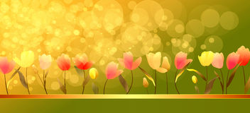 Colorful tulips with sunshine Royalty Free Stock Photos
