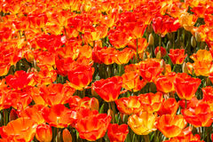 Colorful Tulips at Hidiv, Istanbul Royalty Free Stock Images