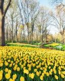 Colorful tulips in Keukenhof Garden stock image