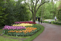 Colorful tulips in keukenhof gardens Royalty Free Stock Photography