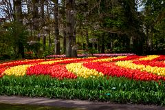 Colorful tulips in Keukenhof park in Amsterdam area, Netherlands Stock Images