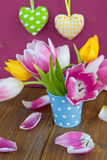 Colorful tulips in a little bucket Royalty Free Stock Image