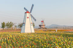 Colorful tulips in the park and wooden windmills on background Royalty Free Stock Image
