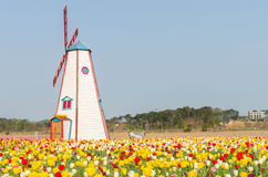 Colorful tulips in the park and wooden windmills on background Stock Photos