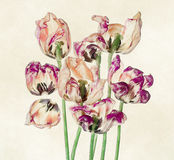 Colorful tulips and petals Stock Image