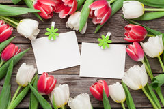 Colorful tulips and photo frames Royalty Free Stock Images