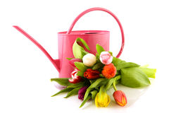 Colorful tulips and pink watering can Stock Photo