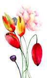 Colorful Tulips and Poppy flowers Royalty Free Stock Images