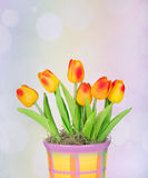 Colorful Tulips in a Pot Royalty Free Stock Photo