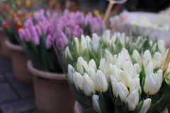 Colorful tulips on sale in Amsterdam flower market, Netherlands. Stock Photo