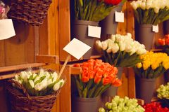 Colorful tulips on sale in Amsterdam flower market. Tulip flowers from Holland for sale , Amsterdam floral market. Royalty Free Stock Photo