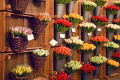 Colorful tulips on sale in Amsterdam flower market. Tulip flowers from Holland for sale , Amsterdam floral market. Royalty Free Stock Image