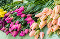 Colorful tulips on sale at the market Royalty Free Stock Photography