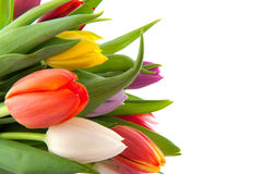 Colorful tulips in spring Stock Images