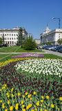 Colorful tulips in a spring garden and the Council of Ministers building in central Sofia. SOFIA,BULGARIA - 15 APRIL : Beautiful tulips in a tulip field in Sofia stock photos