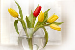Colorful tulips in transparent bowl Stock Photo