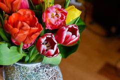Colorful tulips in a vase Stock Images