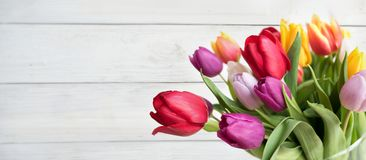 Colorful tulips on white background Stock Images