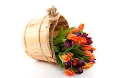Colorful tulips in wooden bucket Royalty Free Stock Photography