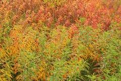 Colorful tundra. Background - haines- alaska Stock Image