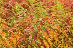Colorful tundra. Background - haines- alaska Royalty Free Stock Photo