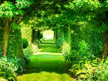Colorful tunnel of green plants stock photography