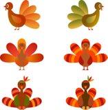 Colorful Turkey Illustrations. On white background, green turkey, orange turkey, brown turkey, fauna, birds, thanksgiving turkey illustrations Stock Images