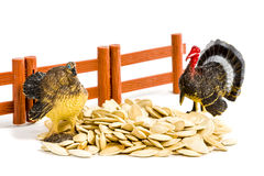 Colorful turkey toy and seeds. Two toy colored turkey standing near the fence in pumpkin seeds isolated on white background Royalty Free Stock Photography