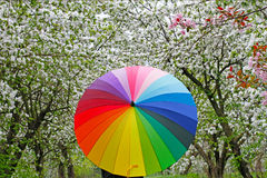 Colorful umbrella on the background of flowering trees Royalty Free Stock Photos