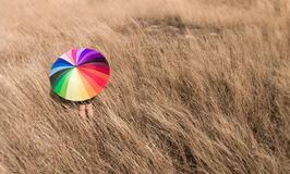Colorful umbrella in the dry meadow. stock image