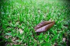 Dry leaves on green grass royalty free stock images