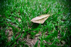 Dry leaves on green grass stock photo