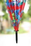 Colorful umbrella. Nature ornamental plants  ornamental  beautiful Colorful umbrella Royalty Free Stock Photo