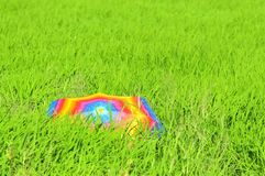 Colorful umbrella and paddy fields Stock Image