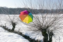 Colorful umbrella in snow on branch. royalty free stock image