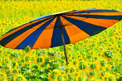 colorful umbrella in sunflower field Royalty Free Stock Photo