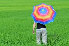 Colorful umbrella, woman and paddy field Royalty Free Stock Photography